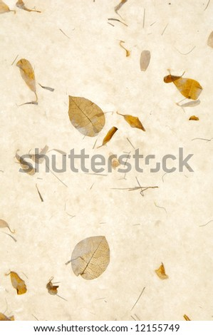 collages leaves with different shapes, rice paper texture - stock photo