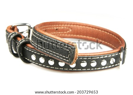 Collar for dogs on a white background - stock photo