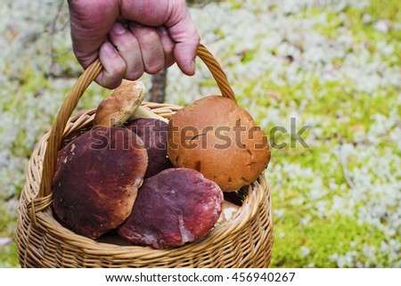 collected edible mushrooms in a basket - stock photo