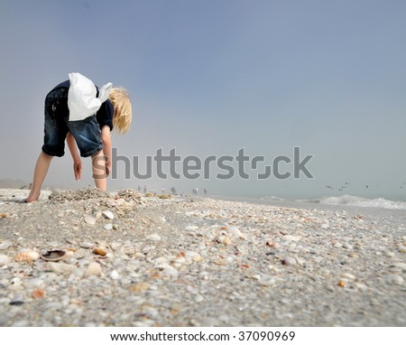 collecting seashells - stock photo