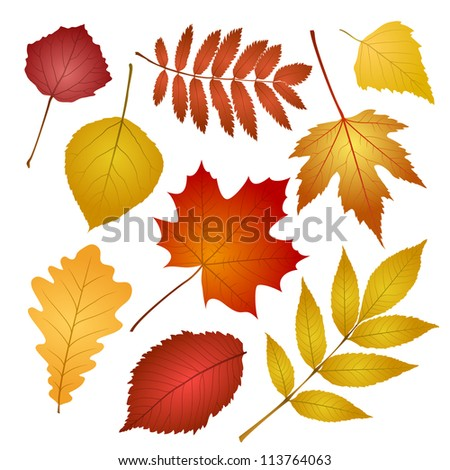 collection beautiful colourful autumn leaves isolated on white background. - stock photo
