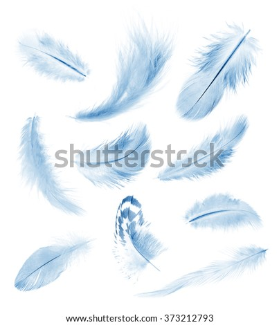 collection blue feathers of birds isolated on white - stock photo