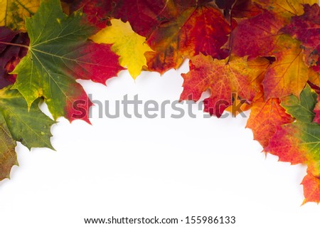 collection colorful autumn leaves of maple - stock photo