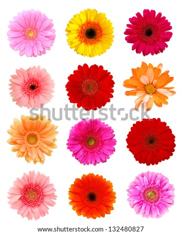 Collection daisy flowers isolated on white background - stock photo
