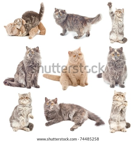 Collection of a cats in different poses isolated over white background - stock photo