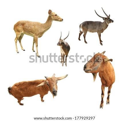 Collection of animal wildlife isolated on white background  - stock photo