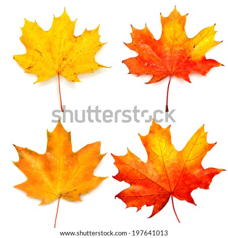 Collection of autumn leaf isolated on white background - stock photo