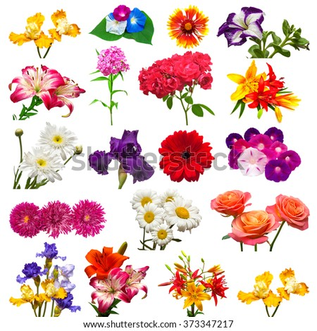 Collection of beautiful colorful flowers isolated on white background - stock photo