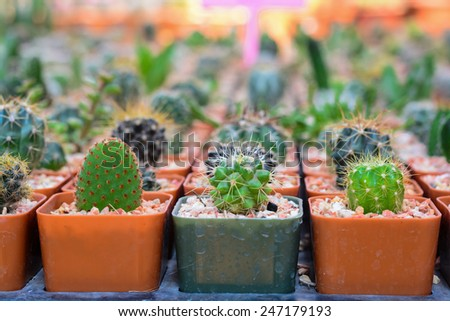 Collection of cactus - stock photo