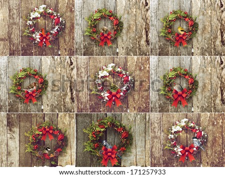 Collection of Christmas wreaths with various colorful birds perched. Each individual, full sized image is also available in my portfolio. - stock photo