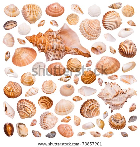 Collection of cockleshell on the white background - stock photo