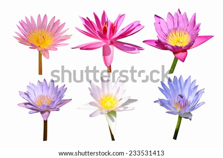 collection of color water lily flowers - stock photo