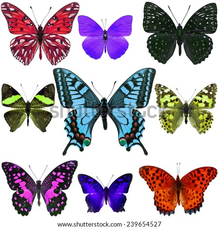 Collection of colorful butterfly isolated on white background - stock photo