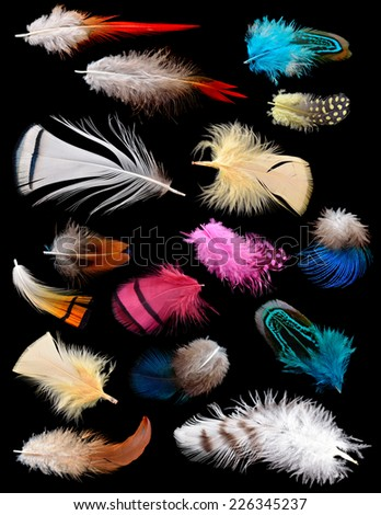 Collection of different color feathers. Isolated on black background. - stock photo