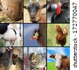 collection of different farm animals, birds and mammals - stock photo