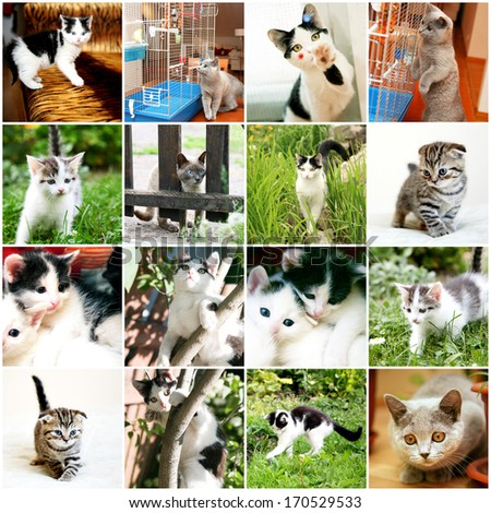 Collection of different funny kitten  - stock photo