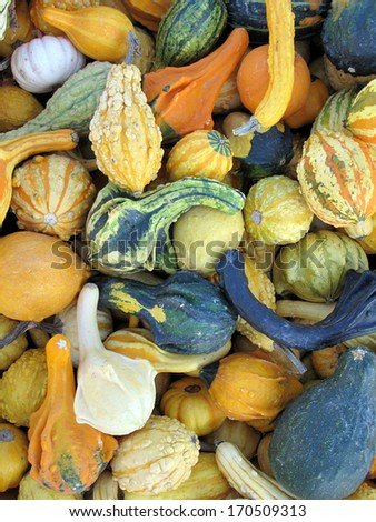 Collection of different squash - stock photo