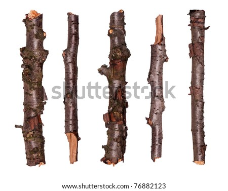 Collection of dry tree branches - isolated on white background - stock photo