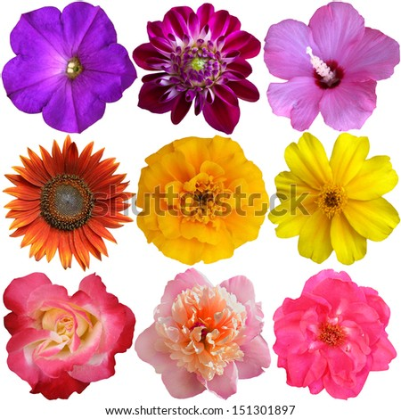 Collection of Flower heads isolated on white background  - stock photo