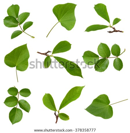 Collection of flower leaves on white background - stock photo