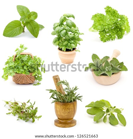 collection of fresh herbs - collage - stock photo