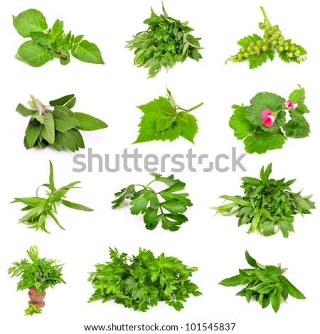 Collection of fresh herbs on the white background - stock photo