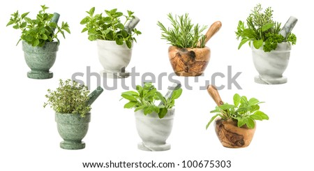 Collection of garden herbs with various pestle and mortars on a white background - stock photo