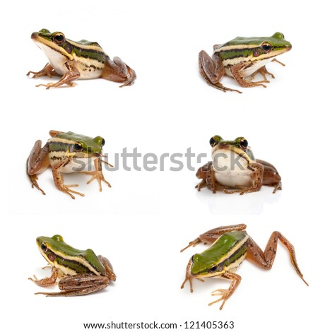 Collection of green frog isolated on white - stock photo