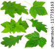 Collection of green leaves on white background - stock photo