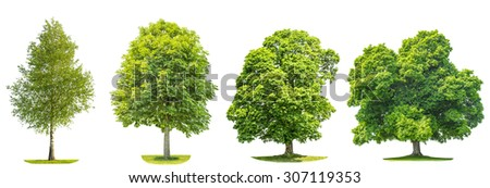 Collection of green trees maple, birch, chestnut. Nature objects isolated on white background - stock photo