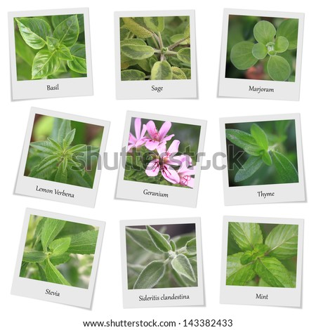 Collection of herbs and spices photo frames - stock photo