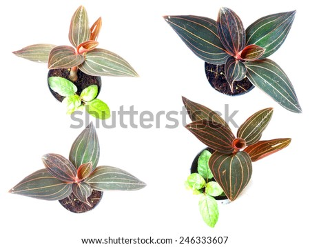 Collection of house plant potted plant isolated on white background - stock photo