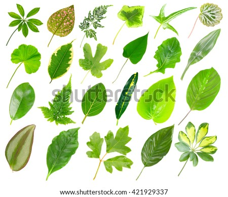 Collection of house plants leaves, isolated on white - stock photo