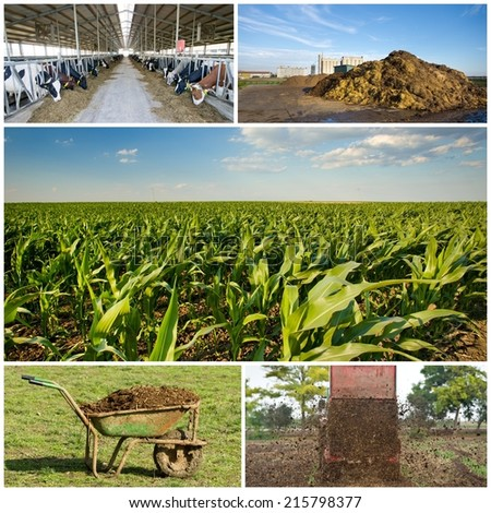Collection of images of fertilizing field with natural manure - stock photo