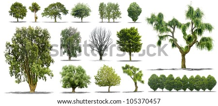 collection of isolated tree on a white background in high definition - stock photo