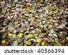 collection of leaves fallen on the ground - stock photo