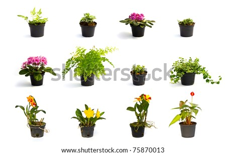 Collection of Little plant in a black pot . Isolated on white background - stock photo