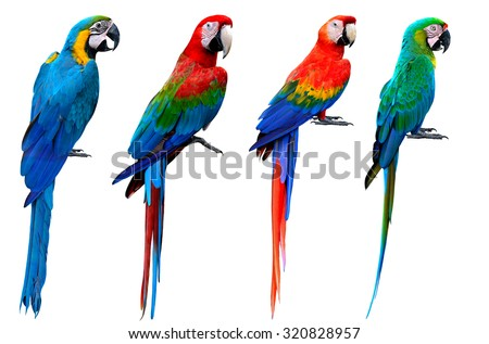 Collection of macaw birds, blue and gold, green-winged, scarlet, buffon's, the beautiful set of colorful parrot birds isolated on white bakcground - stock photo