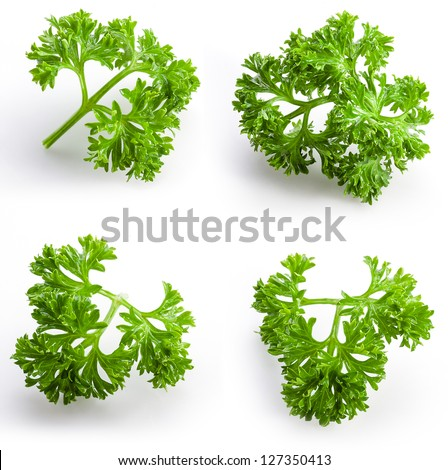 collection of parsley isolated on white - stock photo