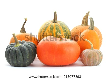 Collection of pumpkins and winter squashes - stock photo