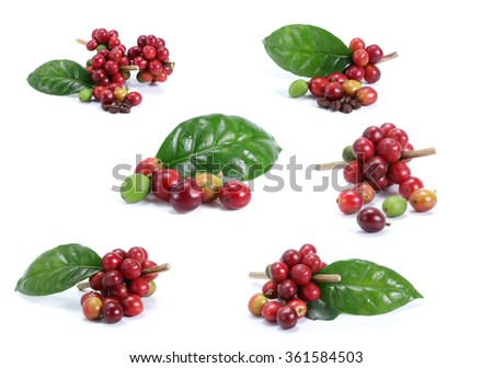 Collection of Red coffee beans isolated on white background - stock photo