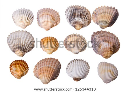 Collection of sea cockleshells on a white background - stock photo