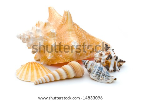 Collection of several weathered seashells, spiral, scallop, conch, over white background - stock photo