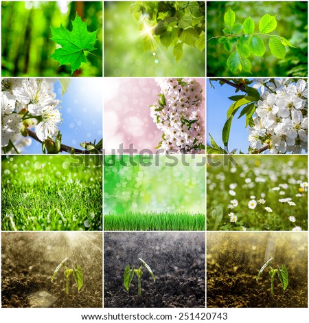 collection of spring backgrounds. Grass, flower,growing, plant, forest - stock photo