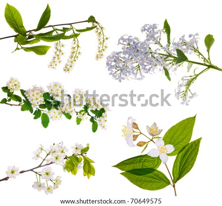 collection of spring blossom isolated on white background - stock photo