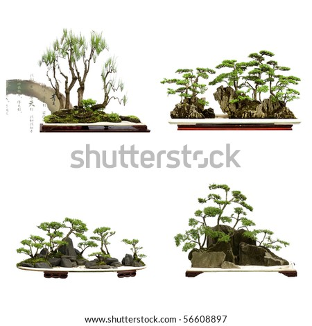 collection of the best china bonsai with white isolated background - stock photo