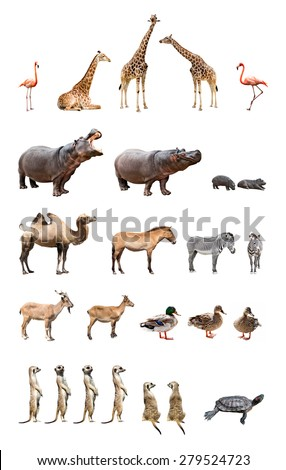 Collection of the zoo animals isolated on the white background - stock photo