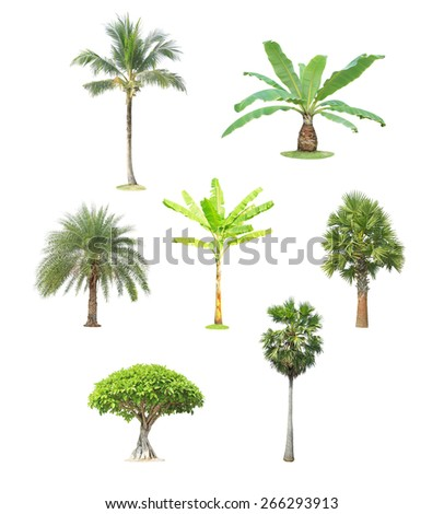 Collection of tree isolated on white background - stock photo