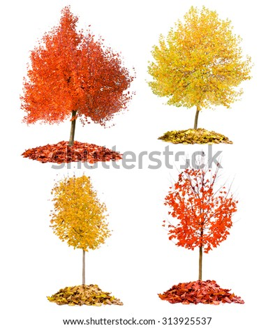 Collection of trees with red and yellow leaves isolated on white - stock photo