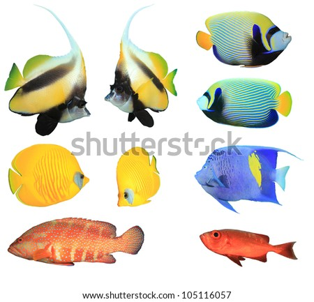 Collection of Tropical Fishes isolated on white - stock photo